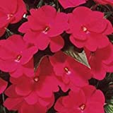 Outsidepride Impatiens Baby Scarlet - 1000 Seeds