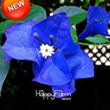 Hot Sale!100 Pcs/Bag Seeds Unique Blue Bougainvillea Spectabilis Seeds Perennial Bonsai Plant Flower Seeds,#3IHPII