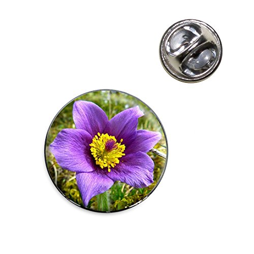 Pasque Flower South Dakota State Flower Buy Online In Bahrain At Desertcart