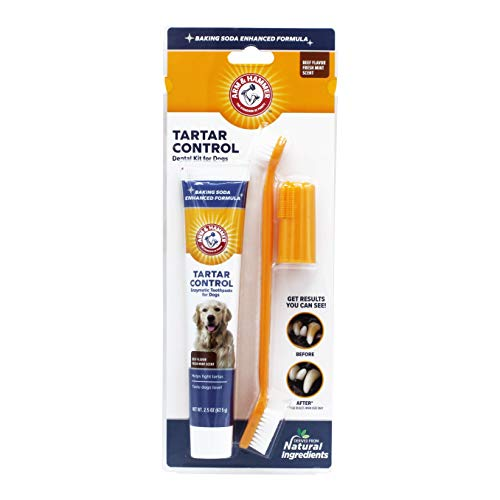 Arm & Hammer Tartar Control Dental Solutions for Dogs   Dog Toothpaste, Toothbrush, Water Additive & Dental Sprays   Vital to Your Dog's Health 1