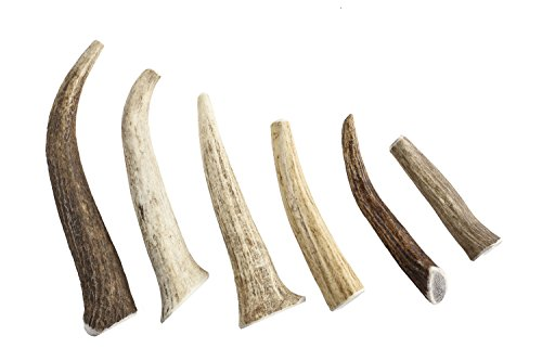 Gnawtlers Premium Elk Antlers For Dogs Naturally Shed