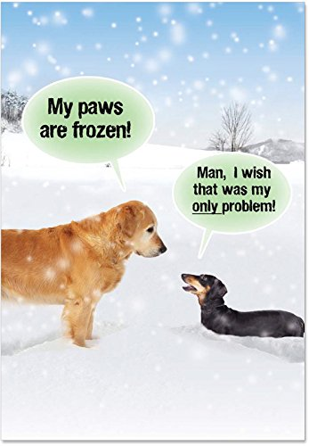 Box of 12 'My Paws Are Frozen Boxed Christmas' Note Card Set