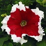 100pcs/bag Climbing Mandevilla Sanderi seeds,Dipladenia sanderi seeds,Bonsai Flower Plant for decoration home&courtyard wall pot
