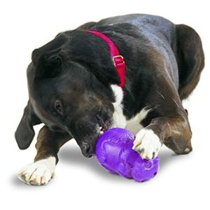 PetSafe Busy Buddy Squirrel Dude Dog Toy, Treat Dispensing Dog Toy, X-Small, Small, Medium and Large Sizes