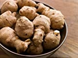 1 LB Organic Jerusalem Artichoke Tubers By Yumheart Gardens For Planting or Eating - Sunchokes - Sunroot -