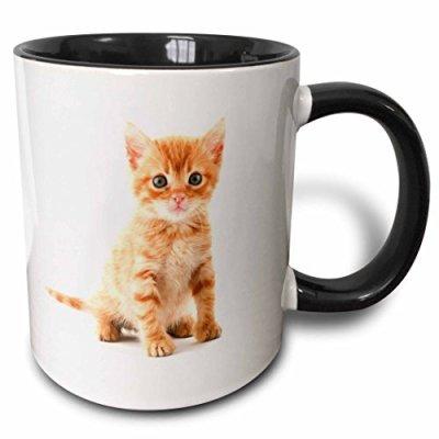 "3dRose mug_44771_4″Cute Orange Tabby Kitten"" Two Tone Black Mug, 11 oz, Multicolor"