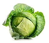 David's Garden Seeds Cabbage Dutch OS22101 (Green) 200 Non-GMO, Organic Seeds