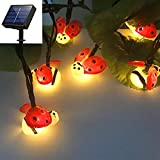 Amants01 Solar Ladybugs Fairy String Lights,21Ft 30 LEDs Solar Powered Best Decoration Lights for Party,Wedding,Bedroom,Library,Study,Room,Home