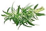 Summer Savory Herb Seeds - 1 Gram - Non-GMO