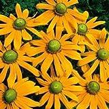 Outsidepride Rudbeckia Hirta Green Eyes - 5000 Seeds