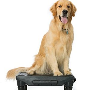 Blue-9 Pet Products The KLIMB Dog Training Platform and Agility System