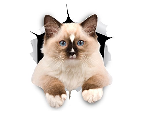 Winston & Bear 3D Cat Stickers - 2 Pack - Brown & White Ragdoll Cat Decals for Wall - Fridge - Toilet - Room - Car - Retail Packaged