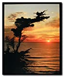 Ocean Sunrise At the Lone Cypress Point Landscape Nature Tree Wall Decor Art Print Poster (16x20)