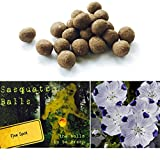 20 Five-Spot Sasquatch Balls. The Ultimate Seed Bombs for the Western US. (Nemophila maculata)
