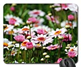 Mouse Pads - Marguerite Tree Daisy Flower