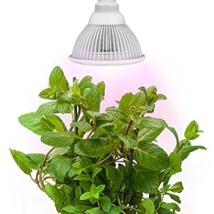 Sandalwood LED Plant Grow Light for Hydroponic Garden and Greenhouse, 12W, E27 Socket