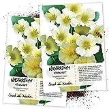Seed Needs, Moonlight Nasturtium (Tropaeolum majus) Twin Pack of 110 Seeds Each