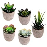 Assorted Decorative Faux Succulent Artificial Succulent Cactus Fake Cacti Plants with Gray Pots, Set of 5
