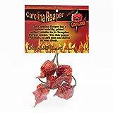 Magic Plant Dried Carolina Reaper Pepper Whole Pods, 1/4 oz.