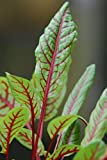 460mg Red Veined Sorrel Seeds ~ Colorful Perennial ~ Baby Salad Greens ~ Garden