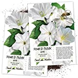 Seed Needs, White Four O' Clock (Mirabilis Jalapa) Twin Pack of 60 Seeds Each