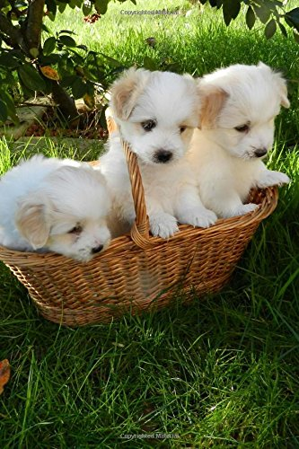 Buy Three Adorable Creamy White Puppy Dogs In A Basket Journal Lined Notebook Diary Book Online At Low Prices In India Three Adorable Creamy White Puppy Dogs In A Basket Journal Lined