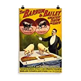 Vintage poster - Trained pigs 1296 - Premium Luster Photo Paper Poster (24x36)