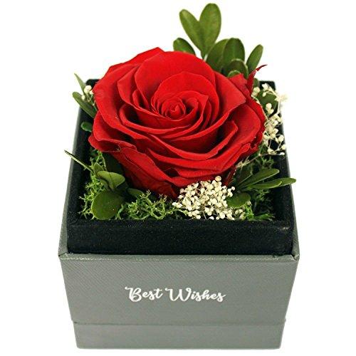 Handmade Preserved Flower Rose Preserved Fresh Flower Eternity