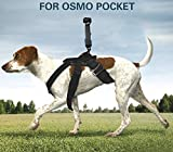 iKNOWTECH Pet Dog Harness Chest Strap Belt Mount Shoot Picture for DJI OSMO Pocket, for GoPro Dogs Mount Harness Adjustable Chest Strap Mount Belt Fetch for Cameras