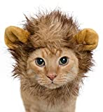 Lion Mane Cat Wig & Small Dog Costume + FREE Catnip Toy - Limited Time Offer! Great for Halloween!