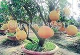 New Arrival!!! 20/bag Hardy Mini Pummello Pomelo Pomello tree Dwarf kao Pan Grape fruit! Rare Bonsai Fruit seeds for home garden