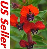15 PCS CUPHEA SCARLET RED SEEDS G37, CIGAR PLANT Flowers Perennial