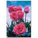 Trademark Fine Art Rose Bouquet by Martha Guerra Canvas Wall Art, 16x24-Inch