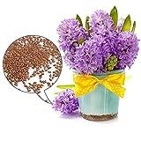 C-Pioneer 600 PCS 23 Color Mixed Hyacinthus Orientalis Seeds, Not Hyacinth Bulbs