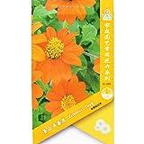 Go Garden Tithonia desl (Orange) 1 Packet 10039; s (Pcs) Mexican Sunflower Tithonia rotundifolia Tithonia Speciosa Garden Plant: 1 Packet