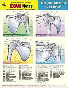 Shoulder & Elbow Anatomy EXAM Notes (EXAM Notes Reference ...