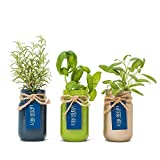 Thoughtfully Mason Jar Herb Garden   Contains Rosemary, Basil and Sage Seeds with Soil Pods to Grow Your Own Herbs