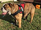 HDP Big Dog Soft No Pull Harness Size:Large Color:Red