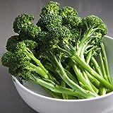 Aspabroc F1 Hybrid Brocolli Seeds - Gourmet Treat Known as Broccolini (25 - Seeds)