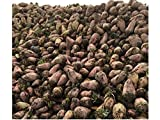 Red Mangel Mammoth Beet Seeds Microgreen Sprouting Garden, or Fodder Giant 311C (24K Seeds, or 1 LB)