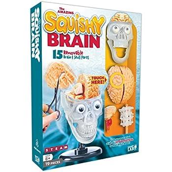 Amazon.com: SmartLab Toys Squishy Human Body: M.D. Lucille ...