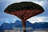Tree seeds 10 pcs Canary Island Dragon blood tree ( Dracaena draco ) showy,exotic,#FIVML3