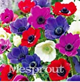 New 12 Different Colors Japanese Anemone Flower 50+ Seeds - 1