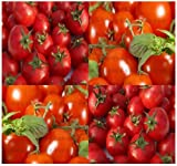 """150 LARGE RED CHERRY GRAPE Tomato Seeds HEIRLOOM Sweet, juicy, bite size ~ 1.25"""""""