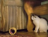 Ve-ge-H-Tech-Double-Sided-Transparent-Furniture-Protection-Cat-Deterrent-Scratching-Tape
