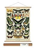 Cavallini Papers Vintage Style Decorative Poster & Hanger Kit 20 x 28, 20' x 28'