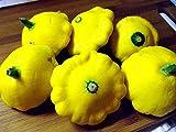 Yellow Scallop Bush Squash pattypan 25 seeds Heirloom Non GMO CombSH G24