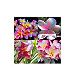 """MIXED 4 CUTTING "" FRAGRANT PLUMERIA'S CUTTING WITH ROOTED 7-12 INCHES REGISTERED TRACK ONLINE 100%GUARANTEE SATISFICATION AND ..."