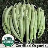 """30 Seeds Okra Seeds, """"Silver Queen"""" , Organic -(Abelmoschus Esculentus) Heirloom !"""