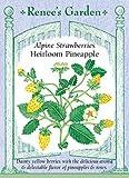 Alpine Strawberries 'Heirloom Pineapple'